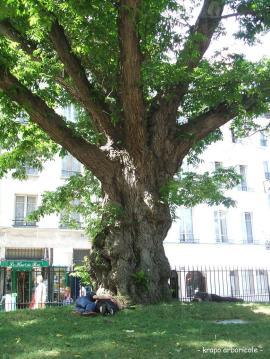 Square saint Julien le Pauvre 5