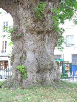 Square saint Julien le Pauvre 6