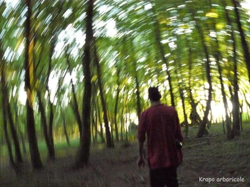 krapo dans les bois