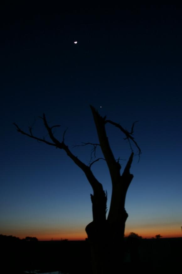 Un arbre, la lune et Vénus