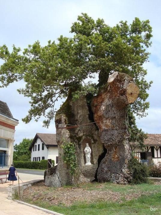 chêne de St Vincent de Paul 1
