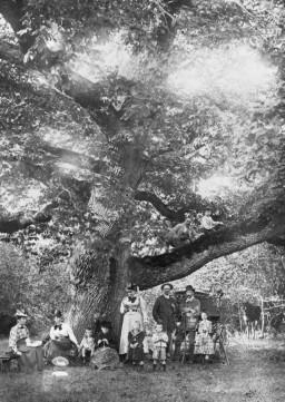 Le chêne des Maitres sonneurs en 1900