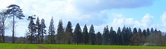allé de séquoïas 1