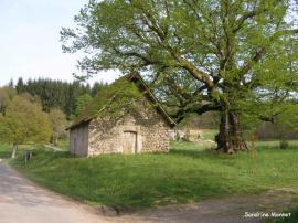 tilleul chapelle Mas Saint Jean 1