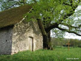 tilleul chapelle Mas Jean Jean 2