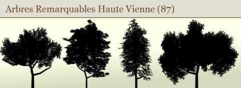 arbres remarquables Haute Vienne