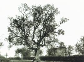 chêne à la vierge côte Saint Auct Elbeuf 25 avril 1890