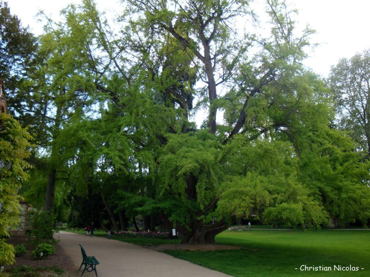 France r sultats de recherche krapo arboricole page 45 for Jardin botanique tours