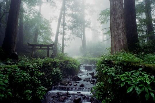 nikkoforest011544x1024.jpg