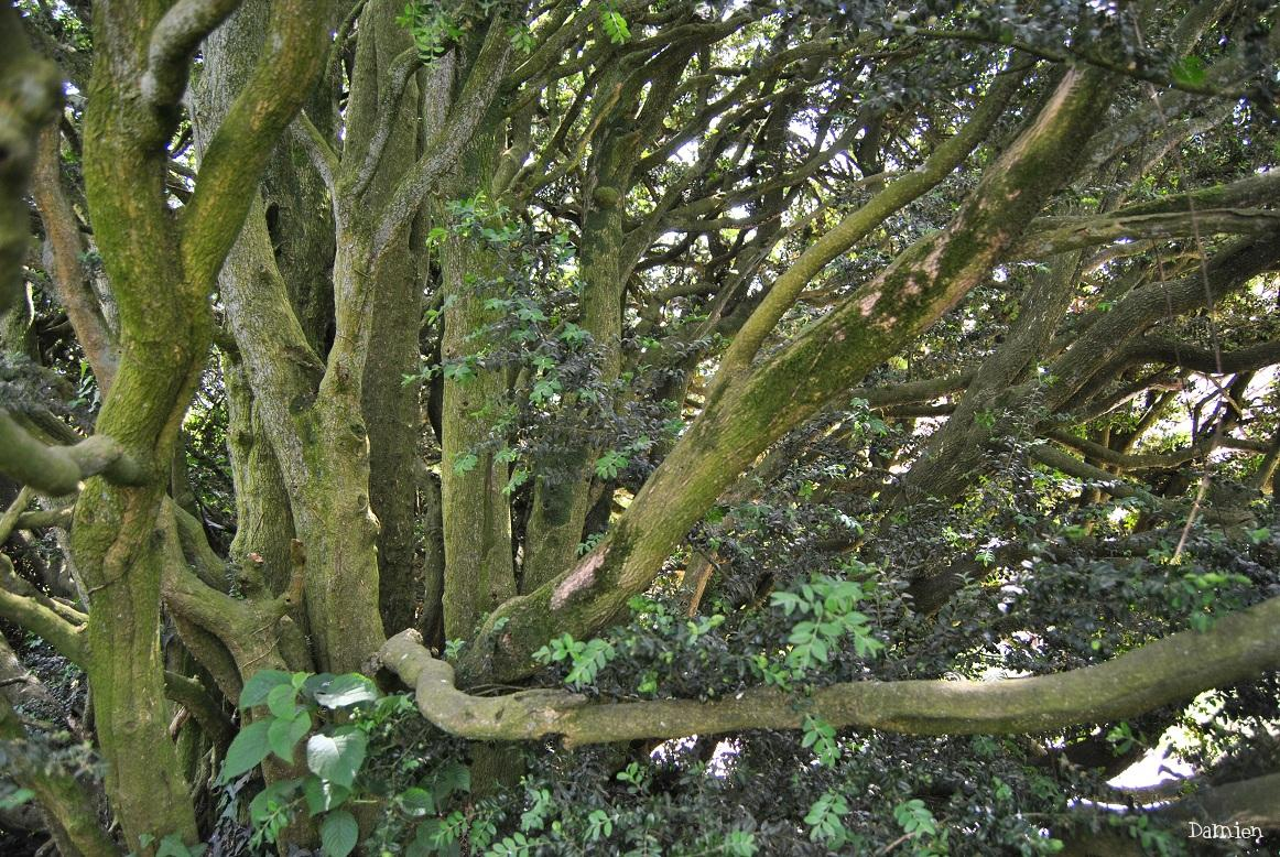 Buis krapo arboricole for Entretien jardin chatellerault