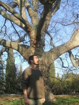 krapo arboricole