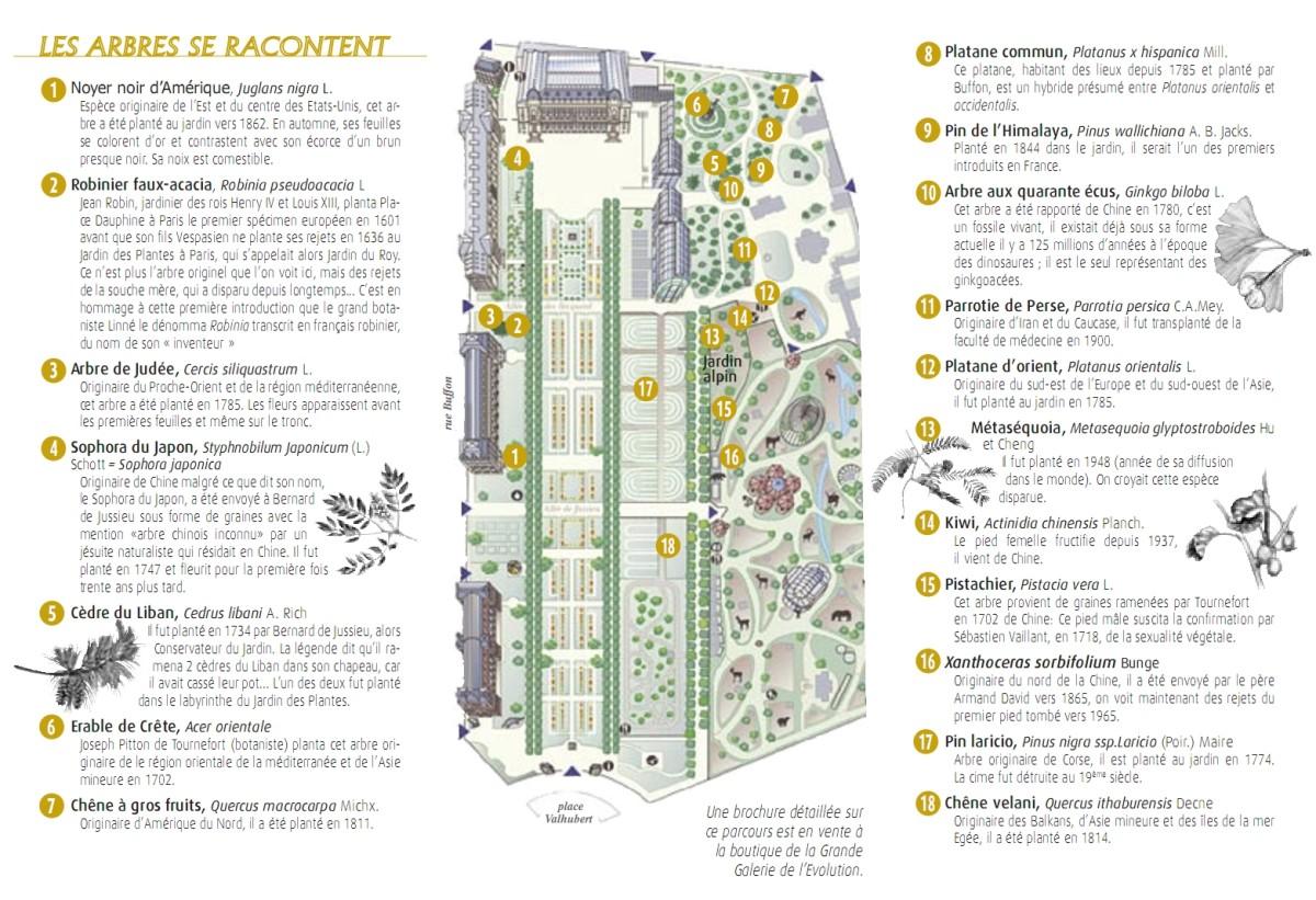 Les arbres du jardin des plantes paris krapo arboricole for Plantes paris