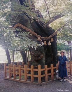Taikodani Inari - Sacred Tree - Jonathan Dresner