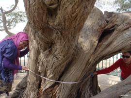L'Arbre de Vie – شجرة الحياة  (Bahreïn) 6