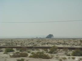 L'Arbre de Vie – شجرة الحياة  (Bahreïn) 3