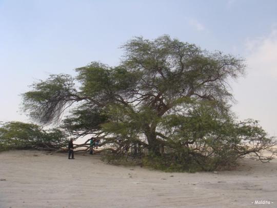L'Arbre de Vie – شجرة الحياة  (Bahreïn) 4