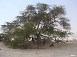 L'Arbre de Vie – شجرة الحياة  (Bahreïn) 5