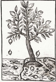 arbreacanard.png
