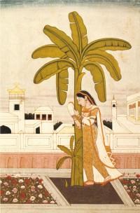 bananier inde