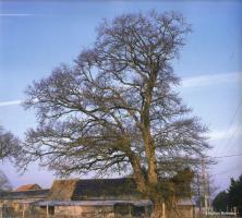 Chêne de La Casse 2 - 2006 © Stéphan Bonneau