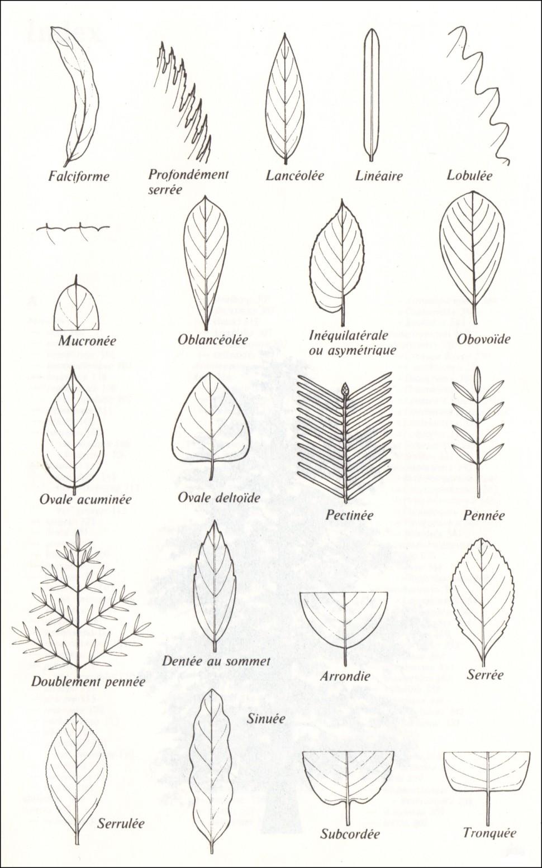 Souvent Reconnaître les arbres | Krapo arboricole ZG39