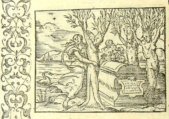 Héliades muées en arbres Métamorphose Lyon 1557 Bernard Salomon