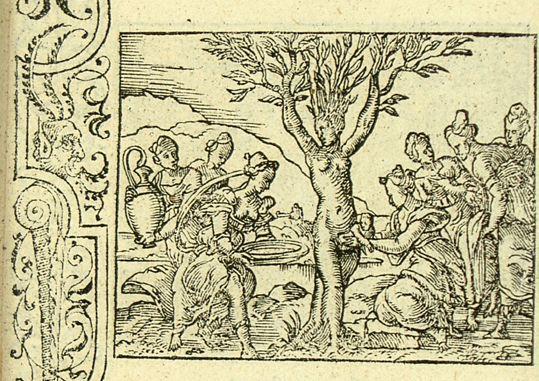 Myrrha accouche d'Adonis par son écorce (Métamorphose Lyon 1557) - Bernard Salomon