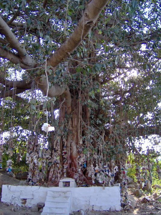 Banyan Tree Hampi Inde