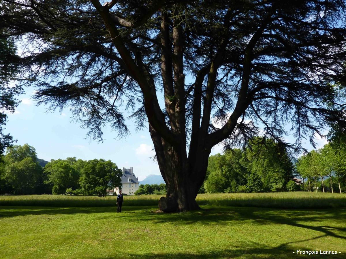 C dre du liban parc du ch teau de sassenage is re krapo arboricole - Cedre bleu du liban ...