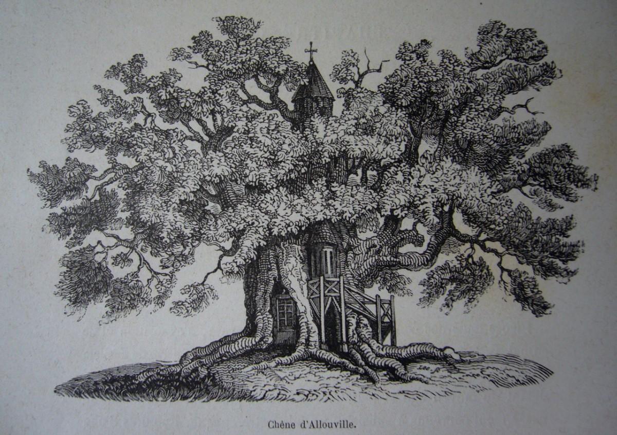 Les arbres remarquables dans les gravures du xix si cle - Dessin figuier ...