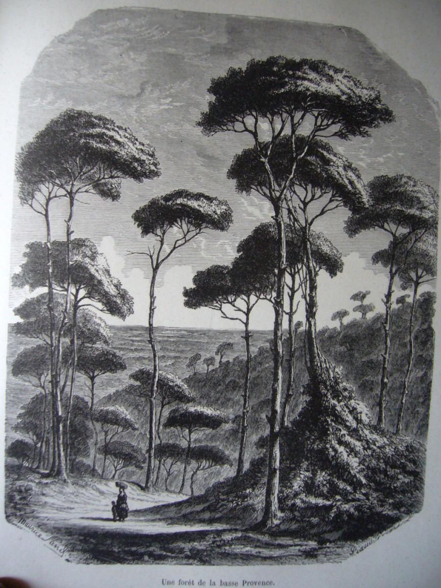 Blanc et Noir ... Noir et Blanc ... - Page 4 Une-foret-de-pin-en-basse-provence-dessin-dapres-nature