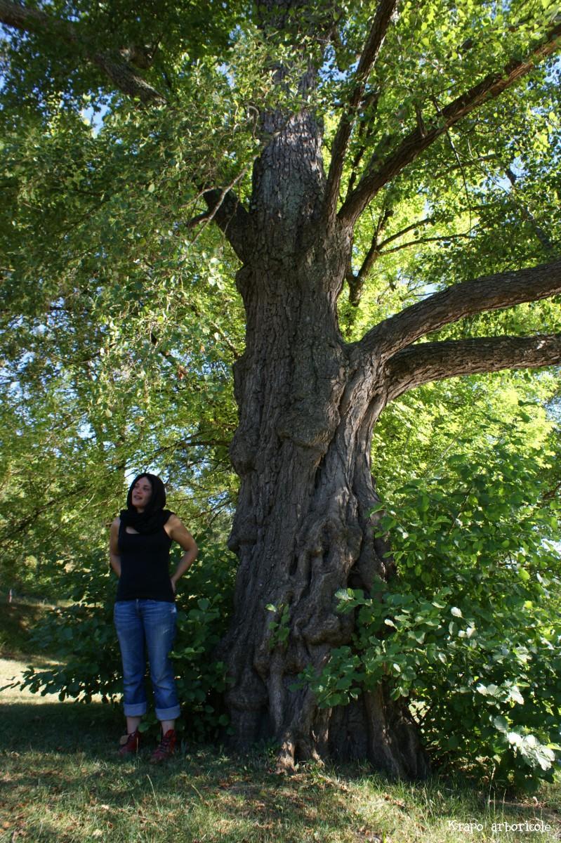 L aulne du lac vert catus lot krapo arboricole - Aulne bois de chauffage ...