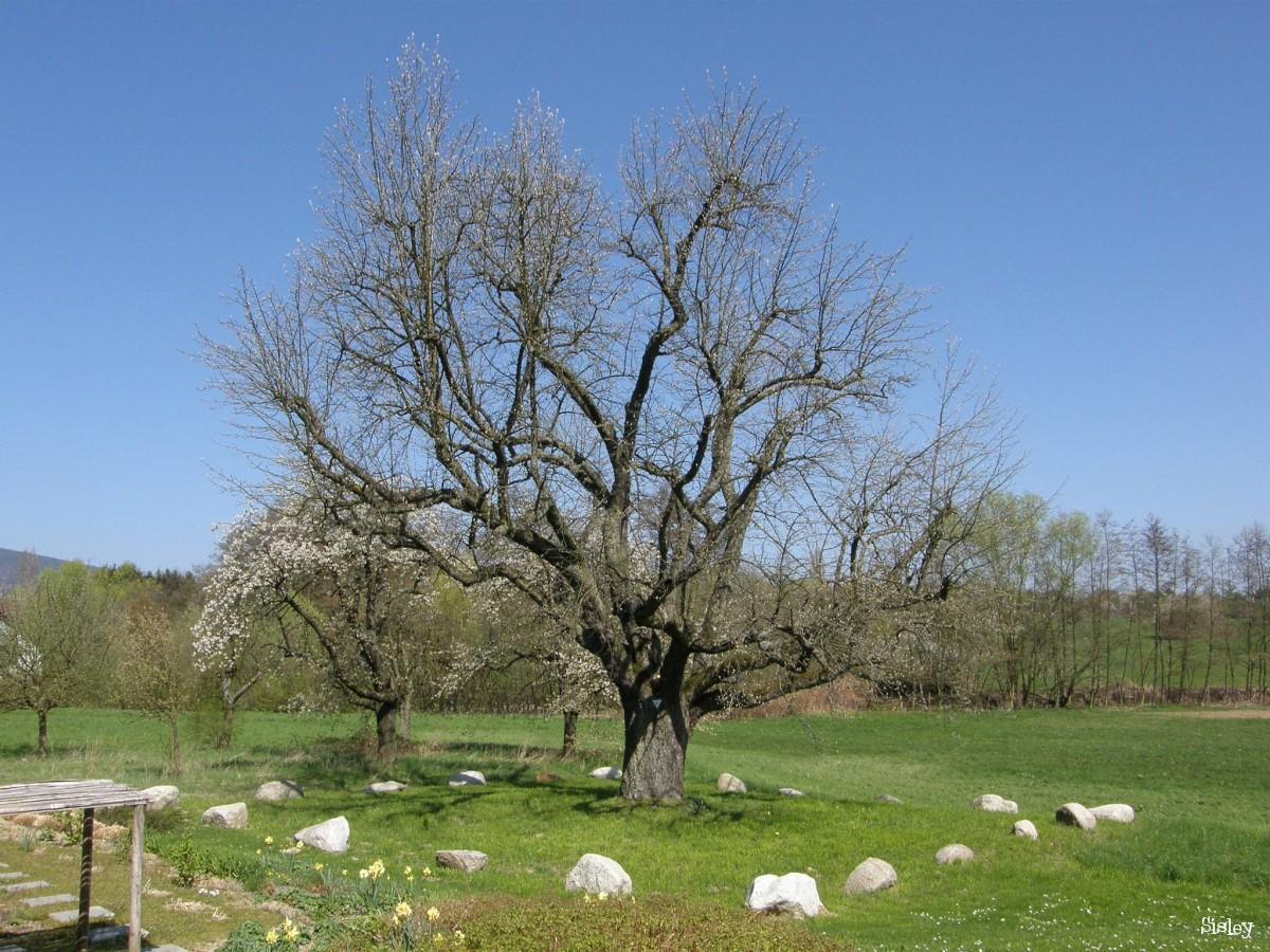 plus de 1000 id es propos de tour d 39 arbre tree ring sur pinterest arbre banc cernes des. Black Bedroom Furniture Sets. Home Design Ideas
