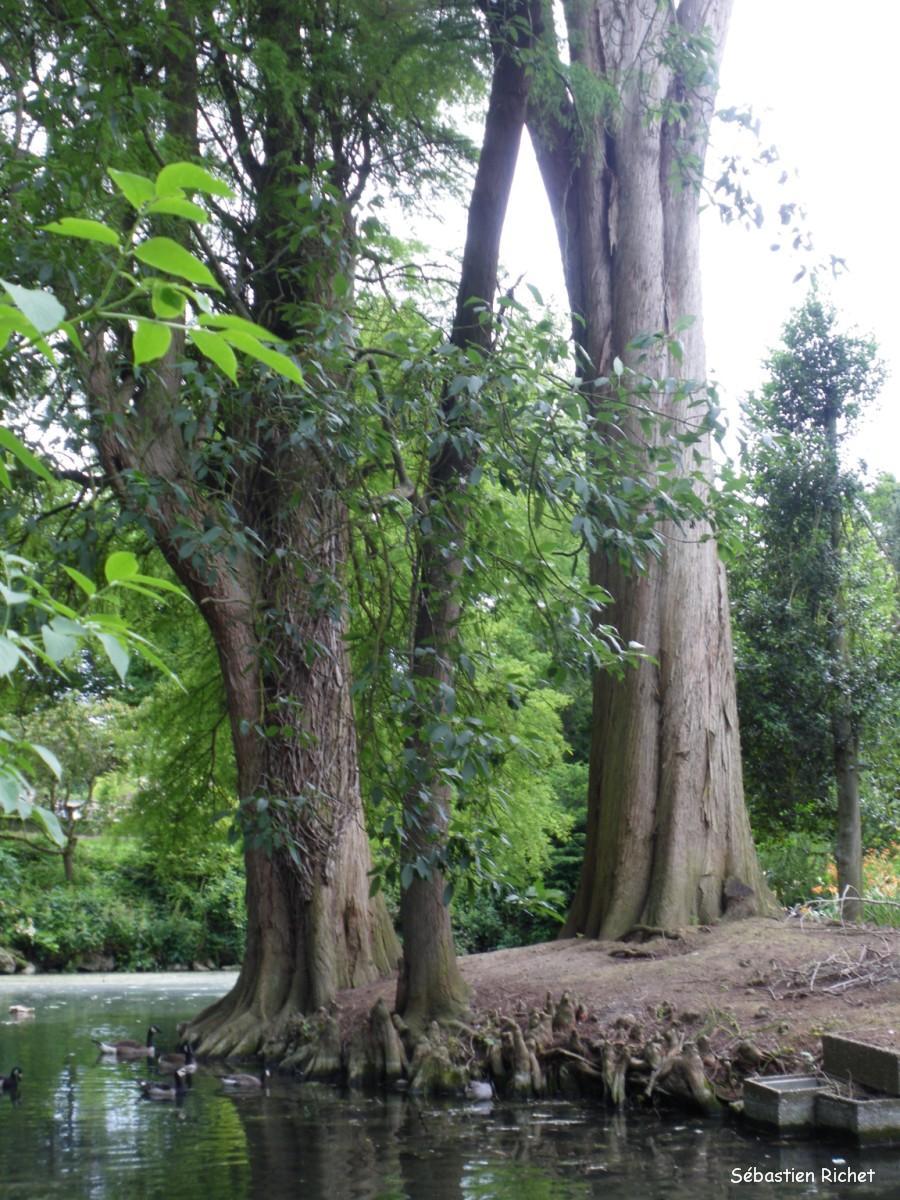 visite au jardin d horticulture de chartres eure et loir krapo arboricole. Black Bedroom Furniture Sets. Home Design Ideas