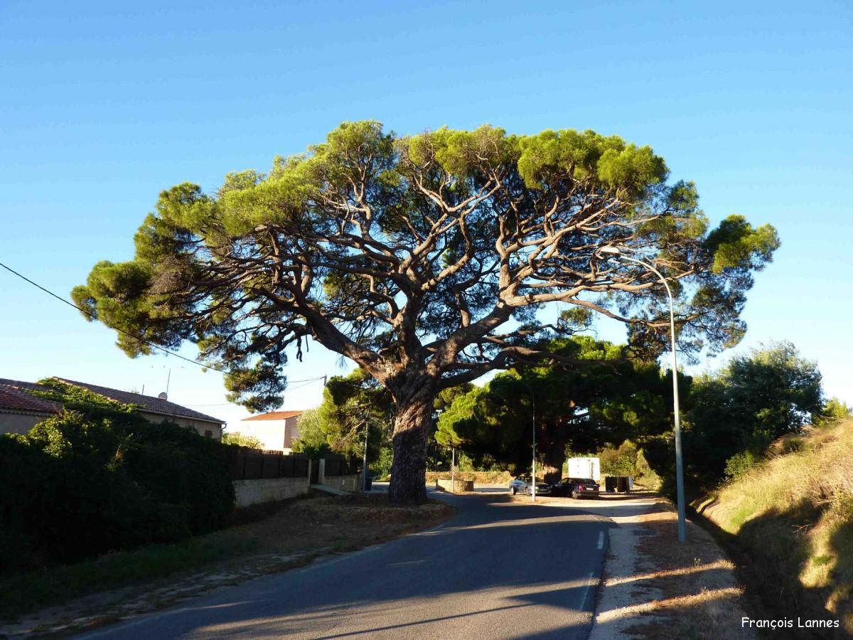 village sous les pin: