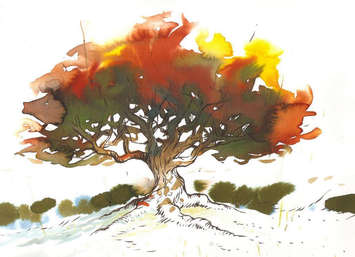 Planter des arbres krapo arboricole - Dessin figuier ...
