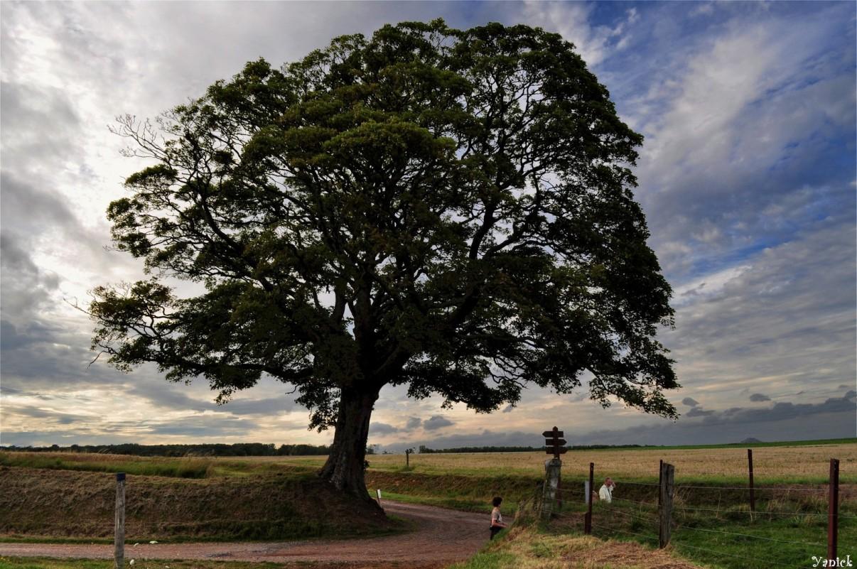 L arbre rond rable champ tre de beugin pas de calais for Fenetre nordiste