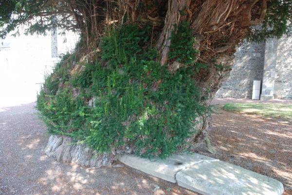 If Montgardon - Han Van Meegeren - Monumental Trees