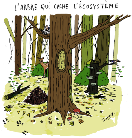 Arbre qui cache ecosysteme © Tommy - Les amis de la Terre