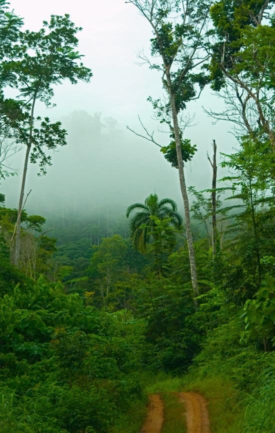 En territoire Surui 2 - Thomas Pizer - Aquaverde