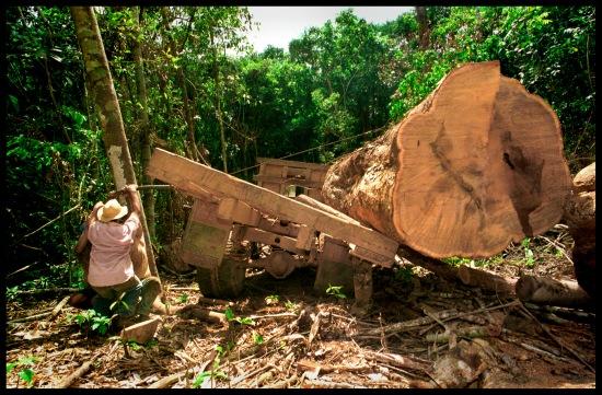 AMAZONIE,BRESIL DEFORESTATION...SUR LA TRANSAMAZONIENNE..... © MAGALI GIRARDIN