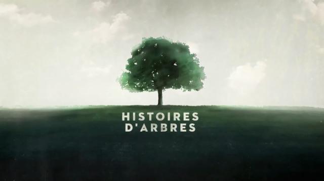 Arte - Histoires arbres
