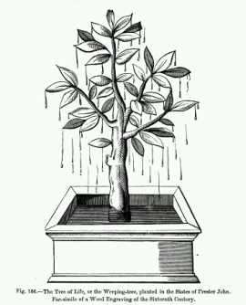 Arbre qui pleure - pretre Jean_crop_366x454