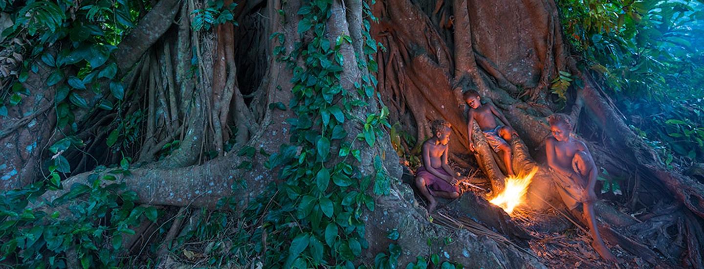 Frères des arbres