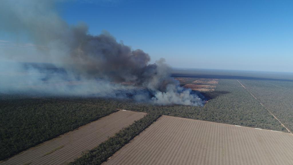 Deforestation argentine - Jim Wickens.jpg
