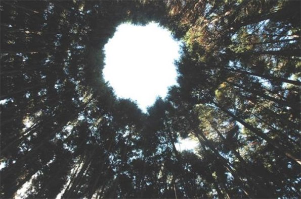 tree-crop-circles-half-century-miyazaki-japan-4-5c1b55876c1d2__700