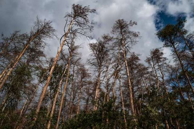 GERMANY-FOREST-CLIMATE-POLITICS