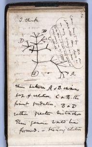 notebook on transmutation of species 1837 darwin
