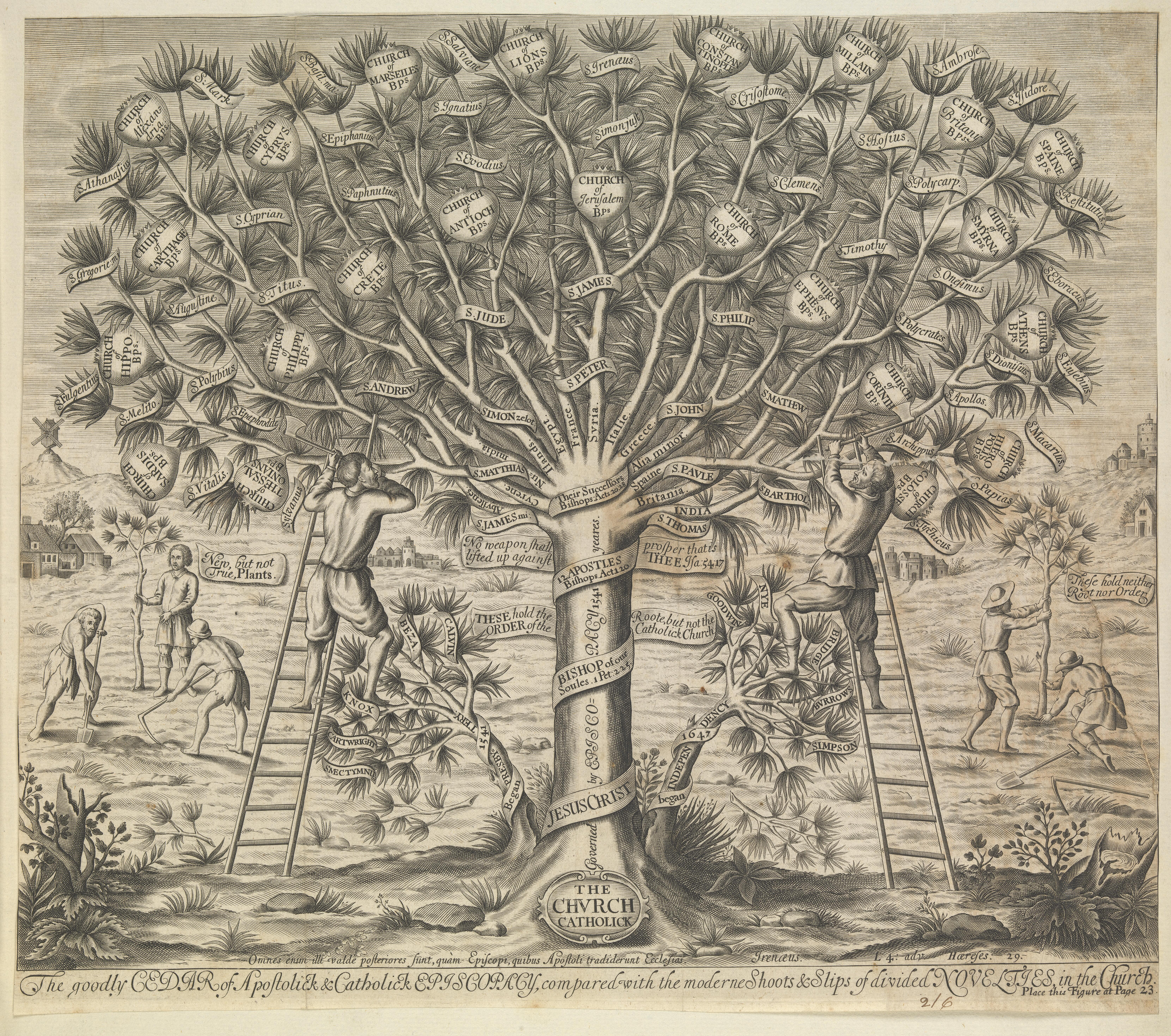 A great cedar tree representing the Catholic church contrasted with two smaller trees representing later denominations-Engraving after W. Cave-1675